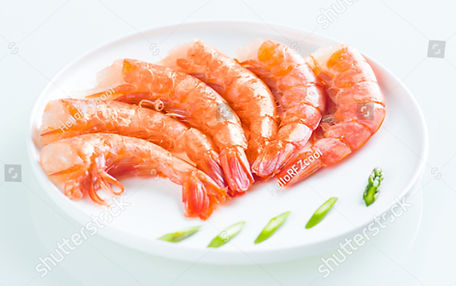 stock-photo-argentina-to-head-red-shrimp