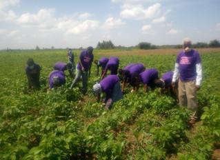 Potential released in Soya Bean planting!