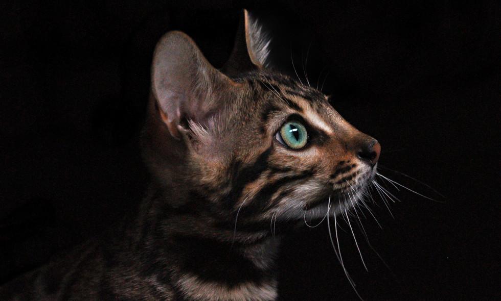 cat-3431519.jpg