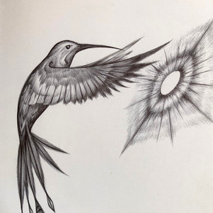 - Colibri ink sketch -