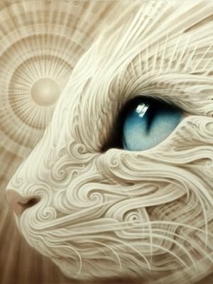 - Blue Eyed Wonder Cat -