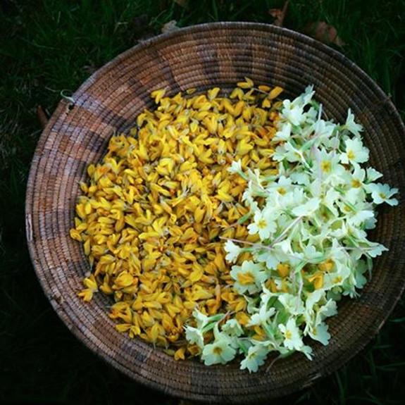 Herbal Forage and Spring Balm Making