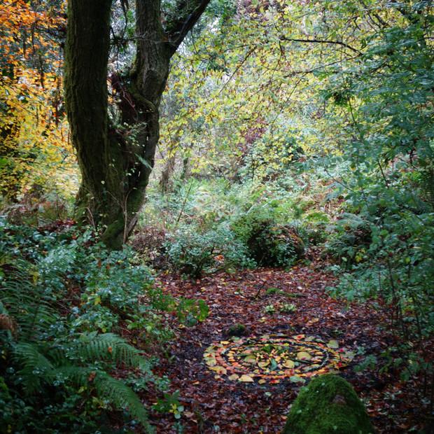 Mandala in the woods