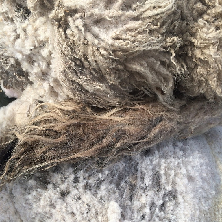 Make your own felted sheep 'skin' rug – Saturday 12th September