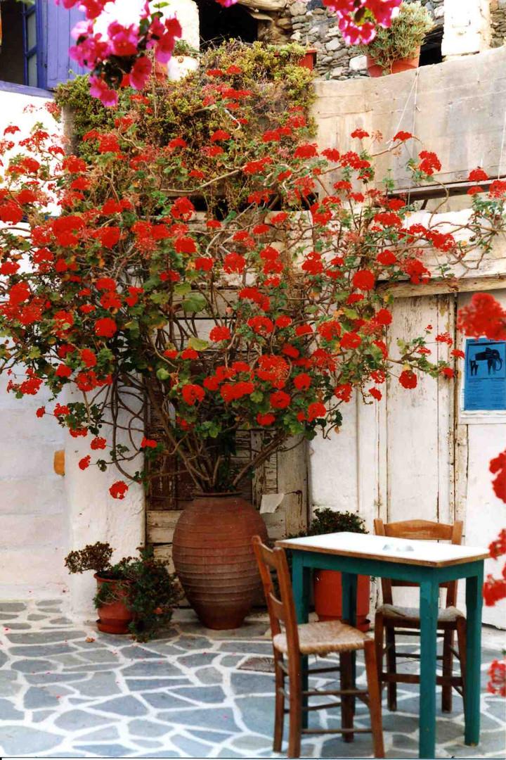courette fleurie018.jpg