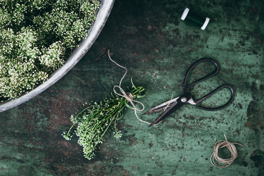 Scissors and fresh herbs