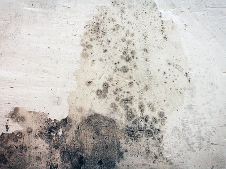 What Causes Mold and Mildew?