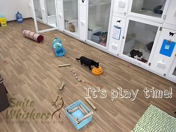 play time image.jpg