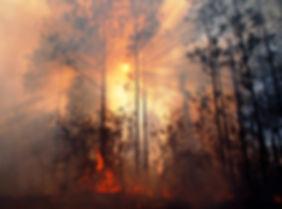 Randy_Tate__Sun_through_Smoke_and_Fire_i