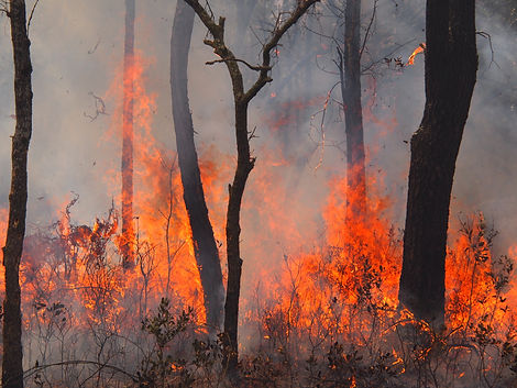 Randy_Tate_Griffin_Ridge_Fire (1).jpg