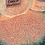 Thumbnail: Conch Glow Glitter