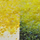Thumbnail: Sunshine Chunky Iridescent