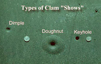 Clam Shows