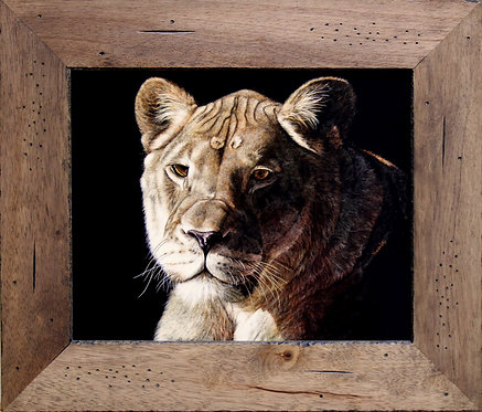 Vivian Etmanczyk's   Lioness