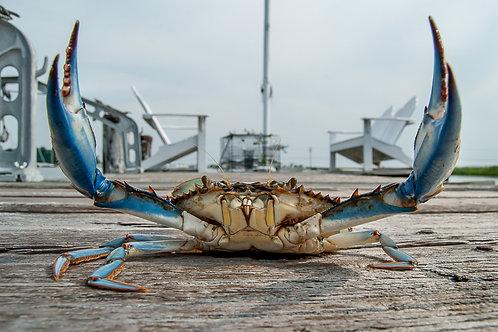 Blue Crab Pinchers