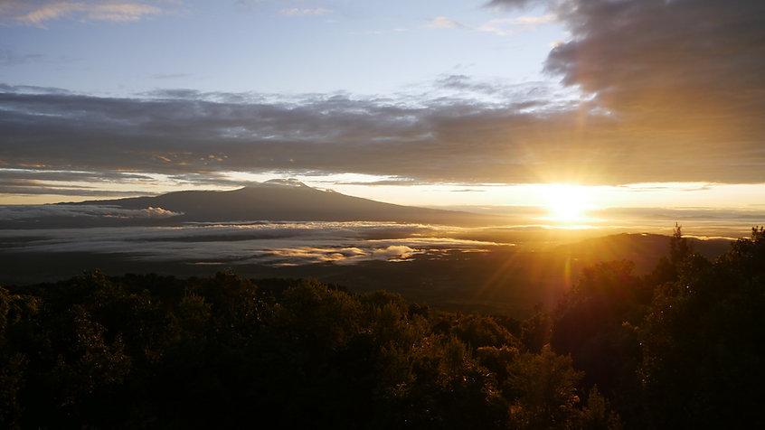Kilimanjaro 2019 (158).JPG