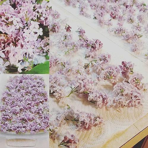 Lilac Enfleurage Pomade Sample