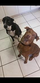 Bobbie and Cedar (two pets)