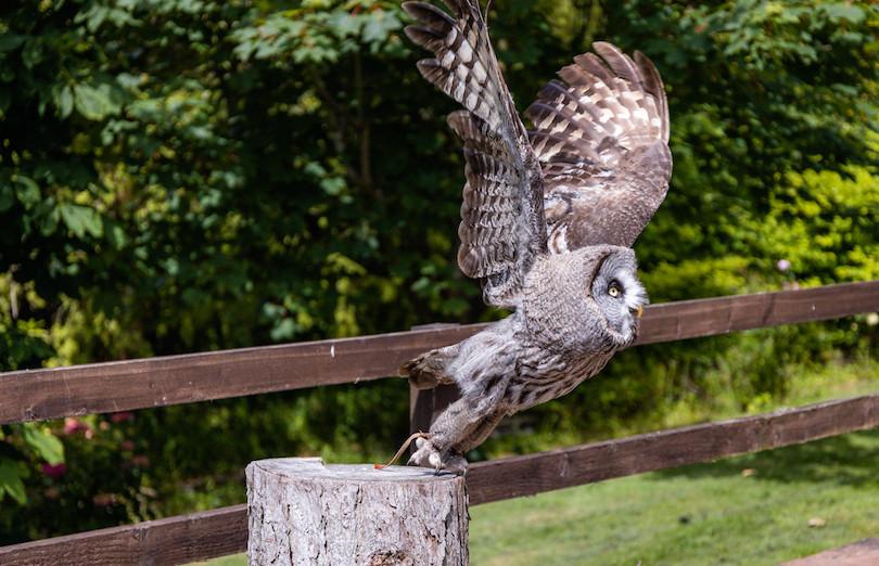 Owl shot.jpg