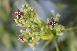 fleur III.jpg