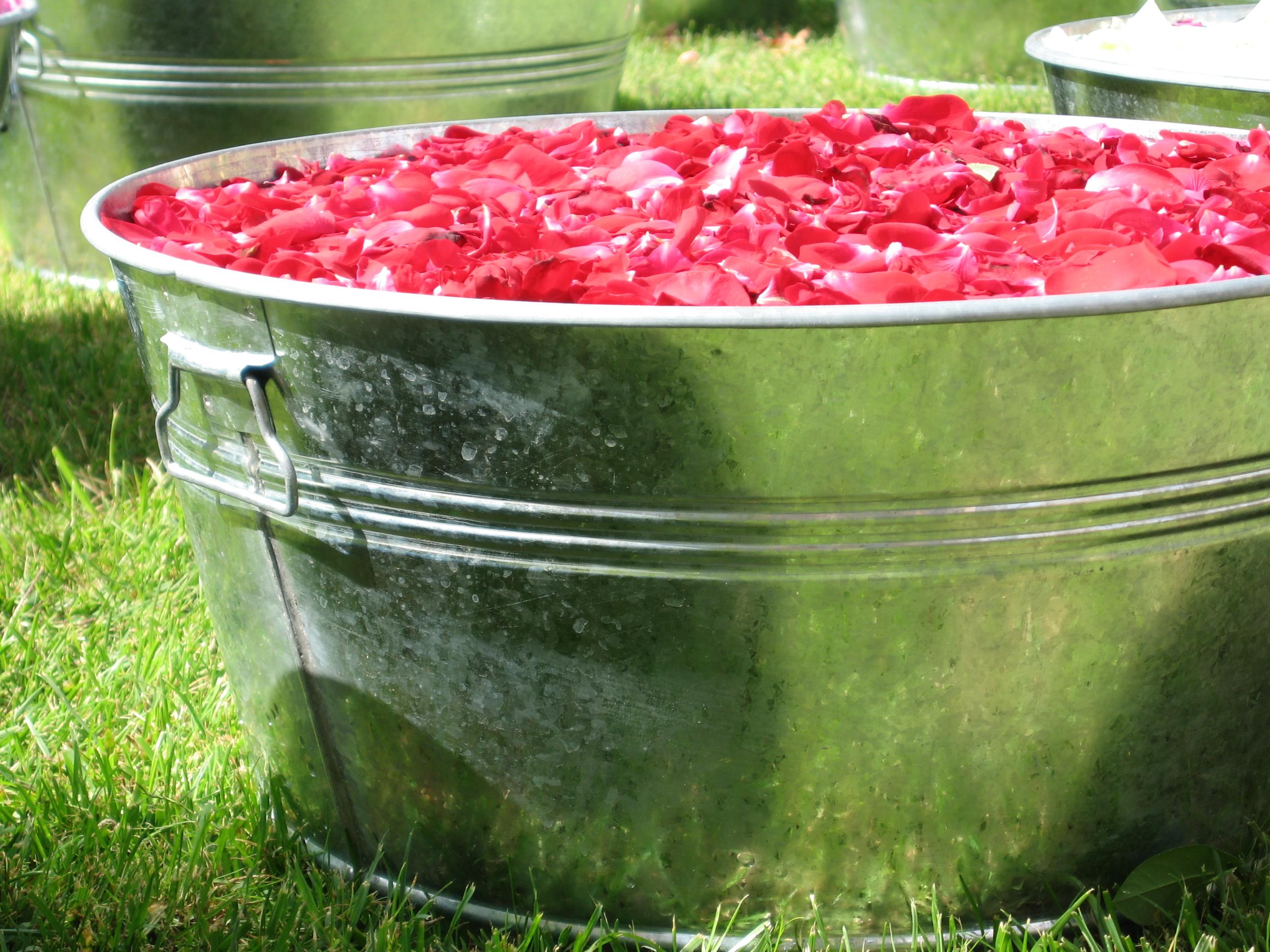 2006-Salon de la rose ORLEANS (6).JPG