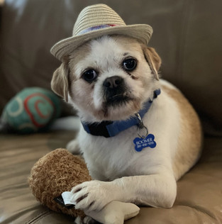 Pet Club Featured Pets: September 2021