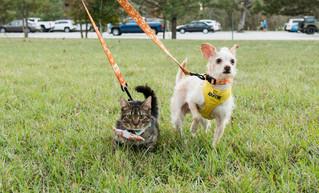Animal Advocates