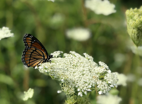 Grief Metamorphosis: The Stages of Transformation After Loss