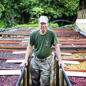 A floresta é o ingrediente de renovação do café brasileiro
