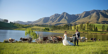 wedding photographer stellenbosch_15.jpg