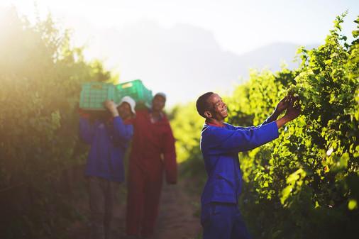 harvest photographer somerset west