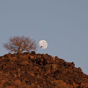 Alan & Karen | Wolwedans, Namibia