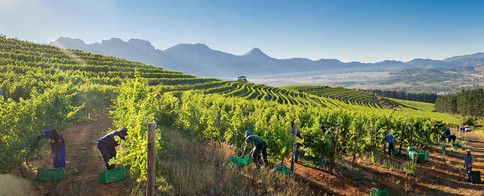 cape winelands photographer