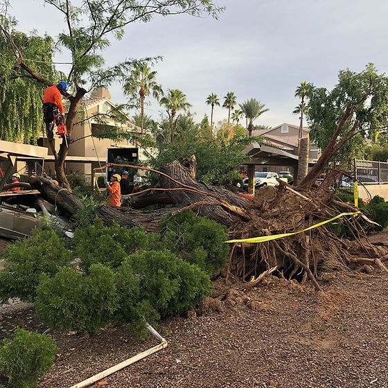 storm damage trees.jpg