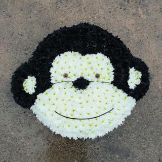 cheeky-chimp.jpg