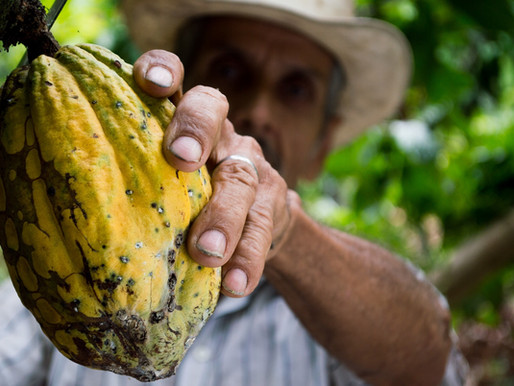 From cacao to chocolate : a whole process