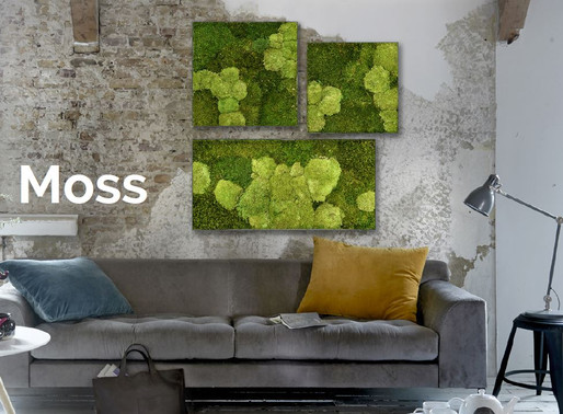Beautiful Moss Wall Panels Ideas for your Home