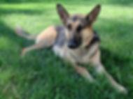 dog-89177_960_720.jpg