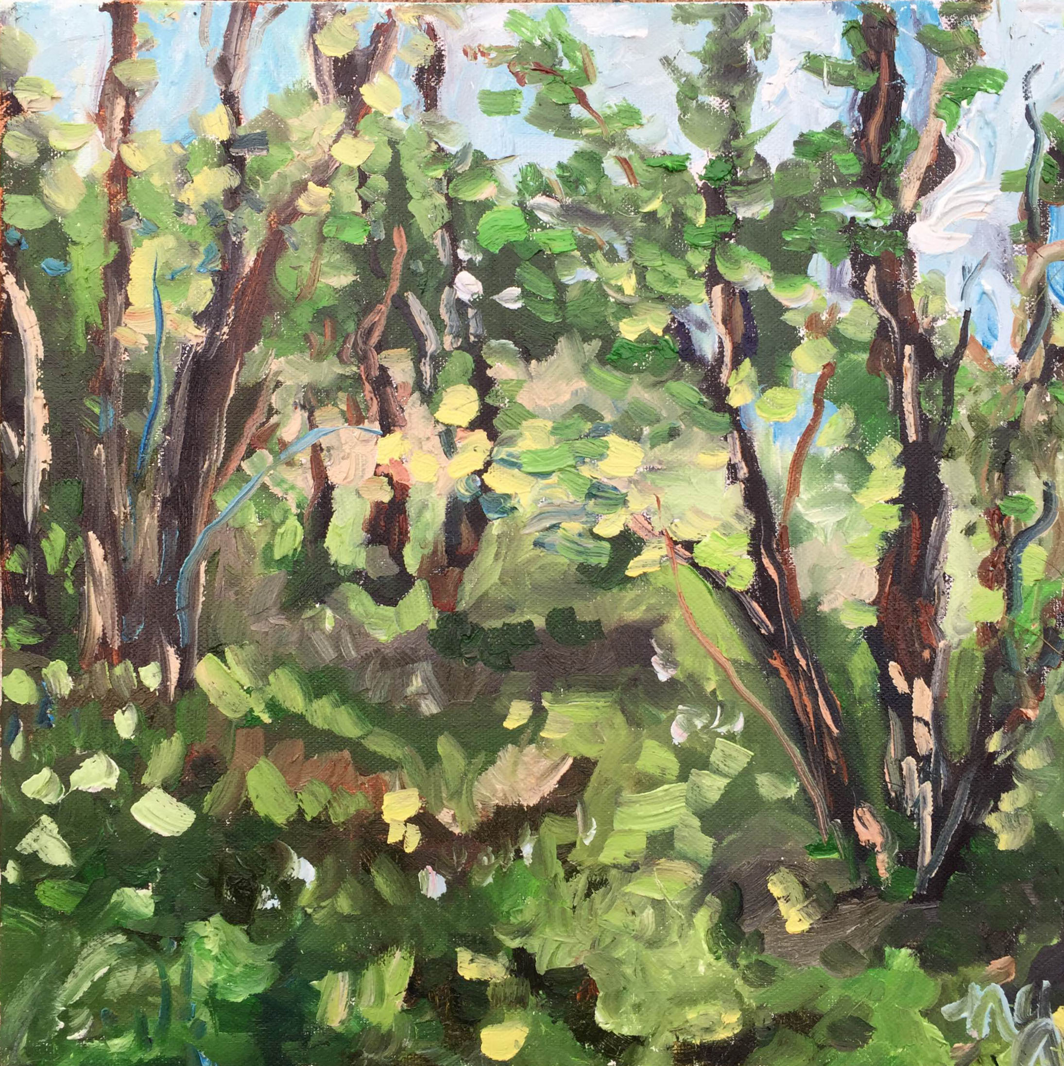 TRSP forest in oil