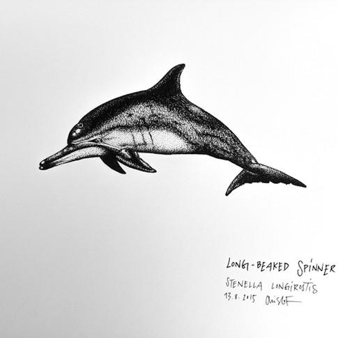 spinner-dolphin_chris-studer-2015-1-of-1