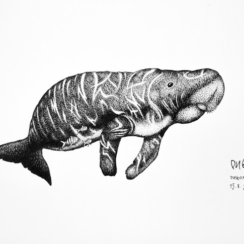 dugong_chris-studer-2015-1-of-1.jpg