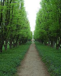 Arbre Chemin Doublé