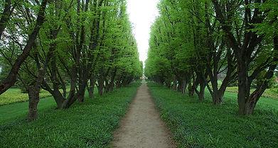 Baum gezeichneter Pfad