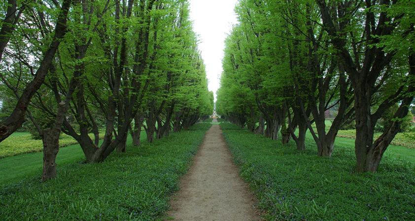 綠樹成蔭的道路