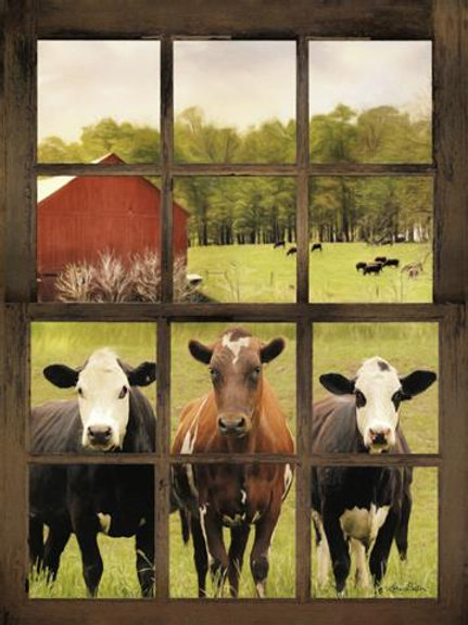 Cows at Window