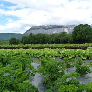 Persil Salade avec vue sur Chartreuse