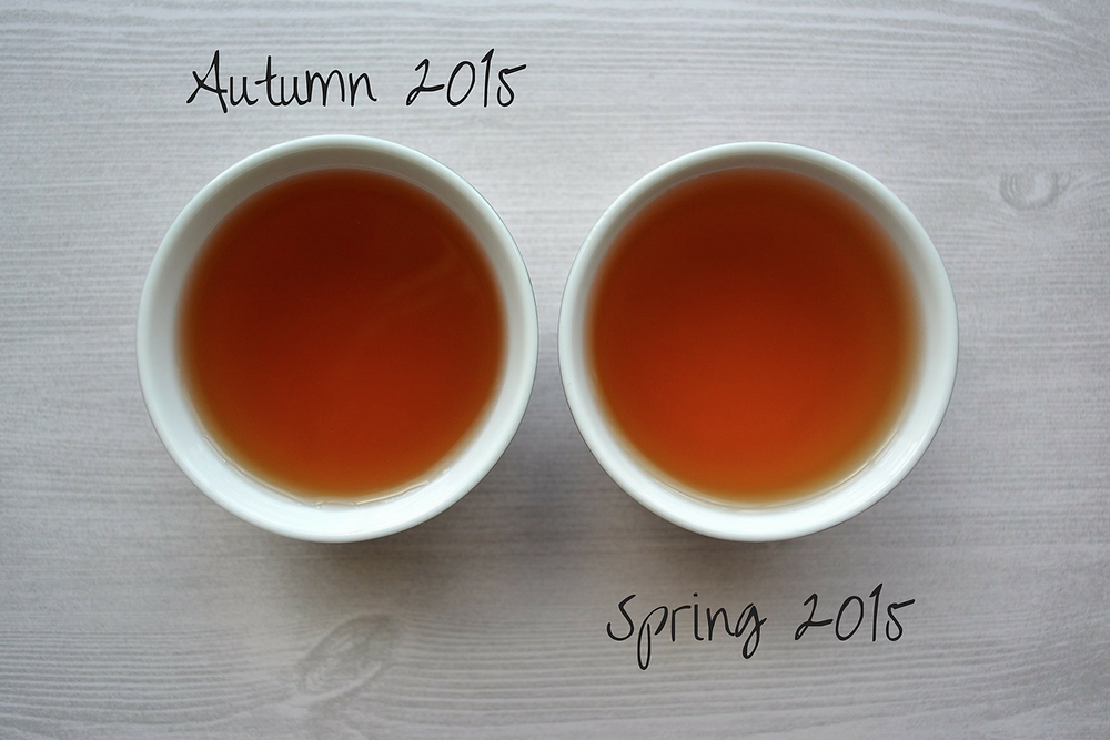 THE SCENT: Autumn & Spring Harvest - Green Pu'er | Misty Peak Teas