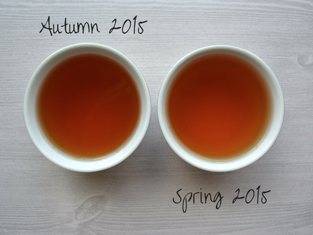 Autumn & Spring Harvest - Green Pu'er   Misty Peak Teas