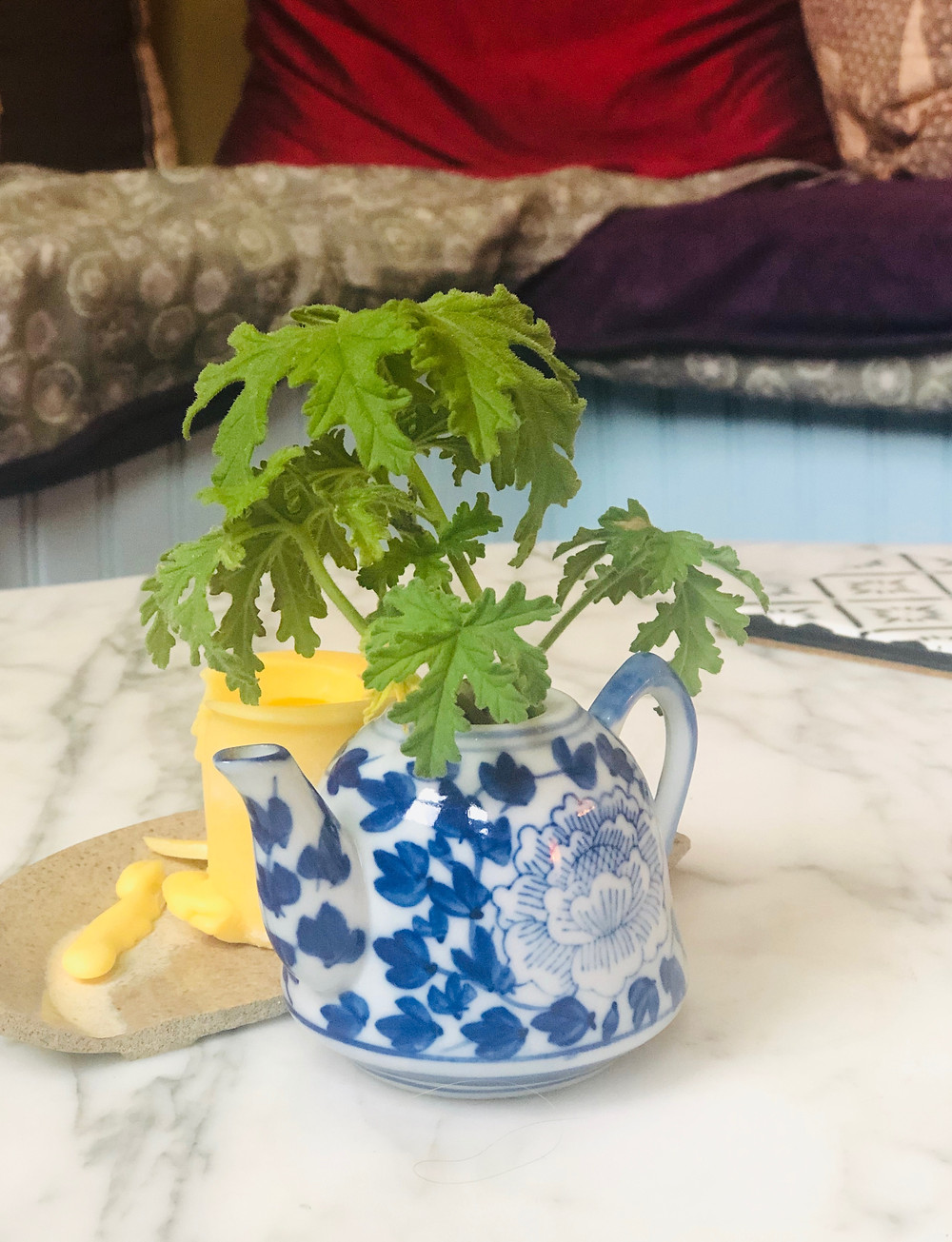 Decorative small tea blue and white tea pot with a small plant growing from it