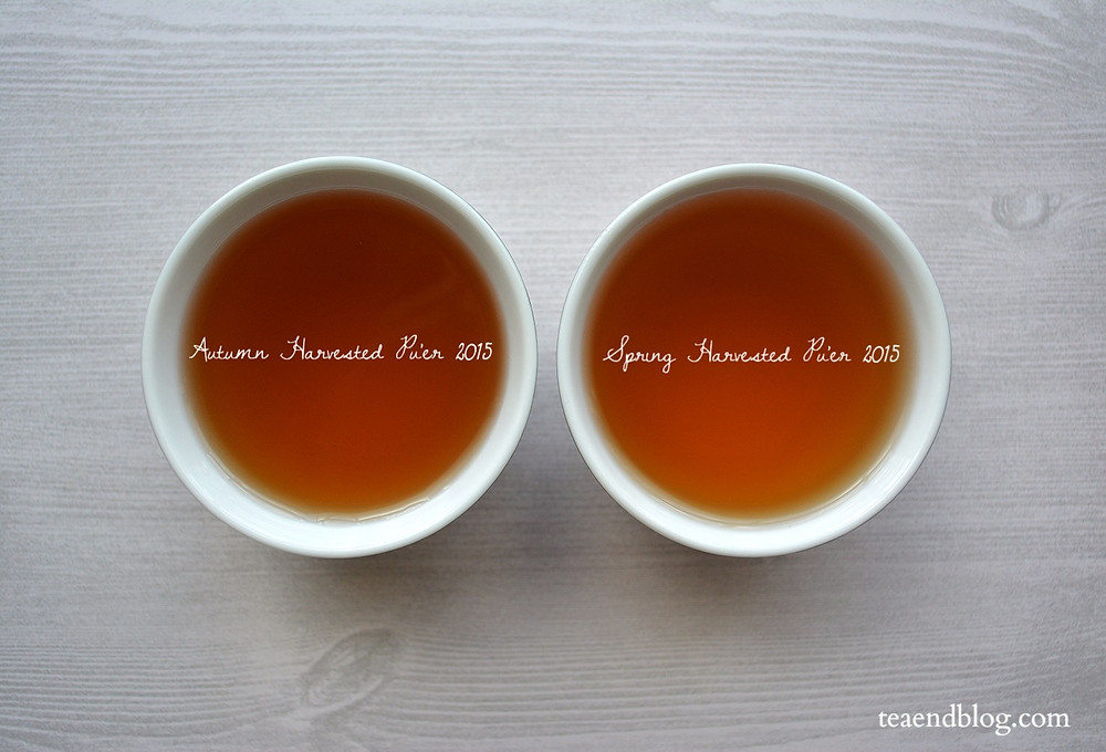 All About Pu'er: Autumn (left) & Spring (right) Harvested Pu'er Teas